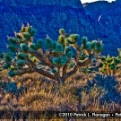 red-rock-canyon-photography-16