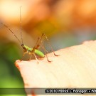 insect-photography-05