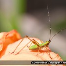insect-photography-06
