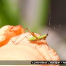 insect-photography-07